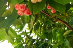 flora Maledivy