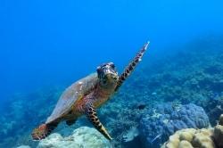 recenze pobytu  na Maledivách