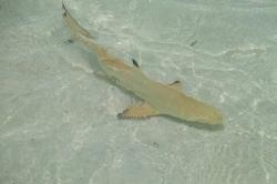 žralok na pláži