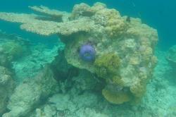 korálový útes při ostrově Ukulhas