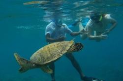 Maledivy mořská želva 1