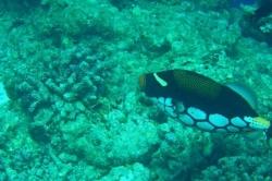 Korálová ryba