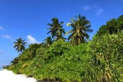 palmy a zeleň