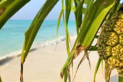 pohled na pláž přes listy palmy