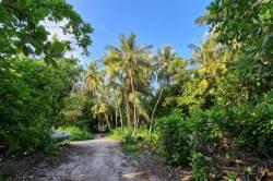 džungle Maledivy