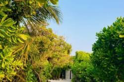 zeleň na Maledivách