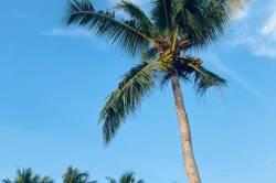 vysoká palma Maledivy