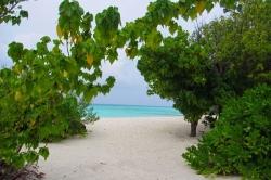 Zeleň u pláže na Maledivách