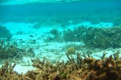 Žralok na Maledivách