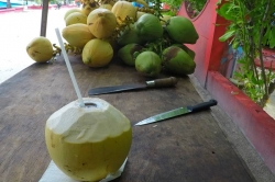 mladý kokos připravený ke konzumaci