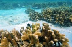 korál při šnorchlování
