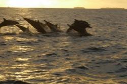 Líbánky,  pozorování delfínů