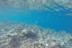 Dovolená na Maledivách - šnorchlování