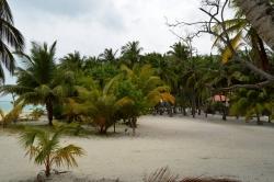 ostrov Mathiveri - palmový háj
