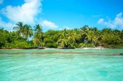 palmy a oceán