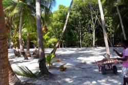 palmový háj dovolená Maledivy