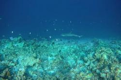 žralok