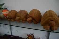 želvy vyrobené z kokosu
