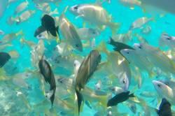 hejno korálových ryb v moři