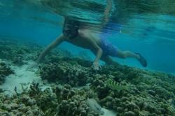 šnorchlování kolem ostrova Huraa