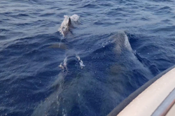 delfíni v moři