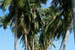 cesta na pláž lemovaný palmami