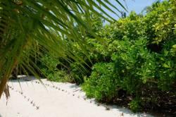 Pláž na ostrově Thoddoo