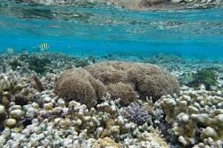 korálový útes na Maledivách