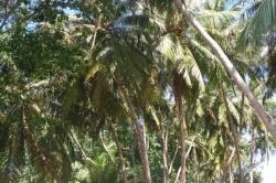 Dovolená na Maledivách - palmový háj