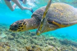 detail mořské želvy