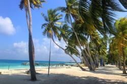 palmy u pláže