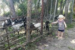 kozí farma Maledivy
