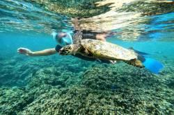 potápění se želvou
