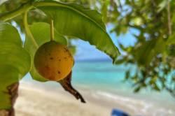 pláž na ostrově Rasdhoo