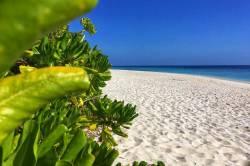 Palmy, písek a moře