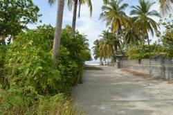 zeleň na ostrově