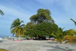 Obrovský strom na Maledivách