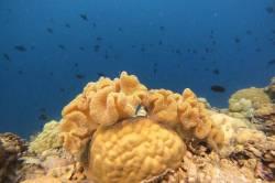 Rasdhoo korálový útes