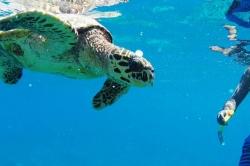Blízké setkání se želvou
