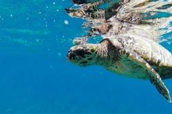 Želva se svým odrazem na hladině