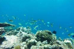 Korály a ryby