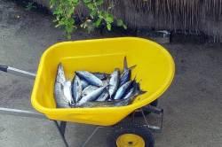 rybářský-úlovek