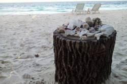mušličky na pláži