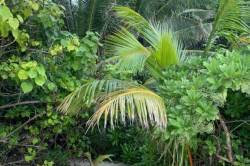 zeleň-na-Maledivách