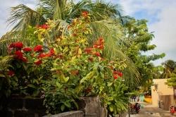flóra Maledivy