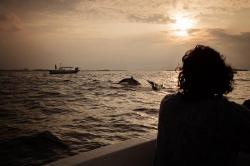 západ slunce a skákající delfíni