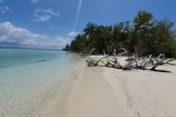 palmy a kmeny na krádné pláži