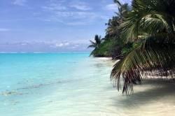 moře a palmy