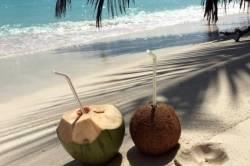 kokosy na pláži na Maledivách