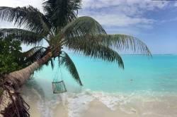 houpačka zavěšená na palmě
